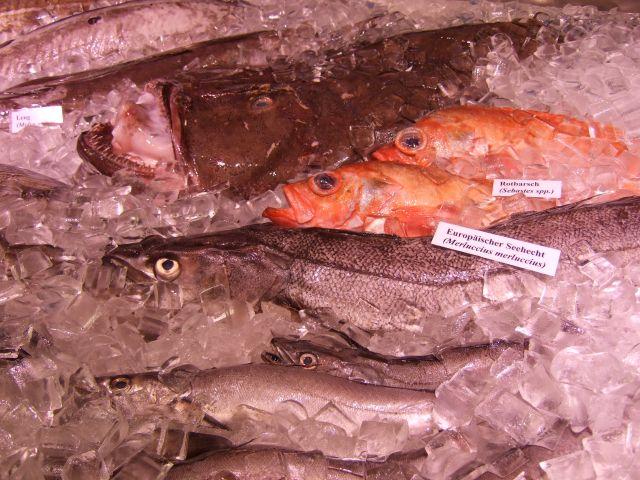 Flow Fisch Fische...
