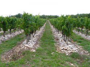 WineSystem_DartingSeminar