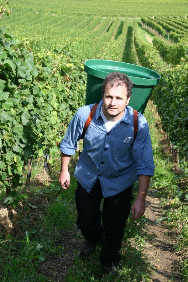 Interview mit Andreas Roll zum Thema Orange Wine