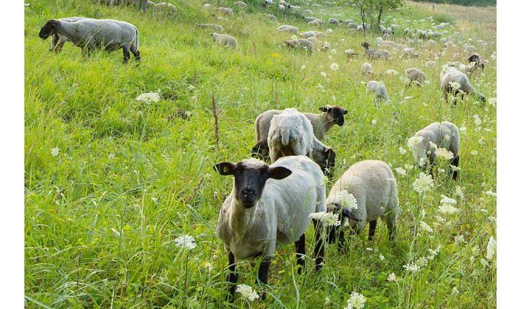 Achtzehn neue Bio-Bauern haben den Förderpreis von NABU und Alnatura erhalten.