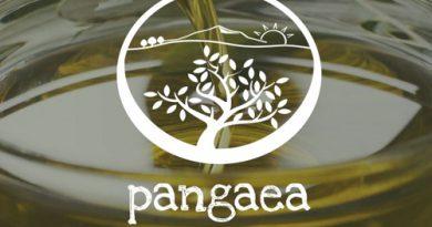 Pangaea Olivenöl – Leidenschaft für guten Geschmack