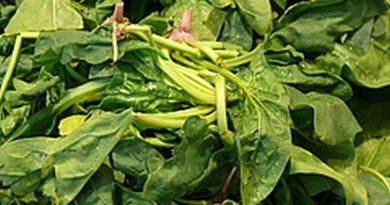 Spinat stärkt – wirklich!