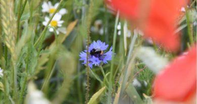 Glyphosat-Zulassung: Bioland Deligierte antworten mit Forderungen für mehr Artenvielfalt