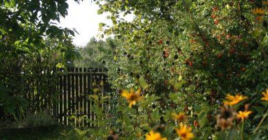 Naturnahes Gärtnern mit NABU und IKEA