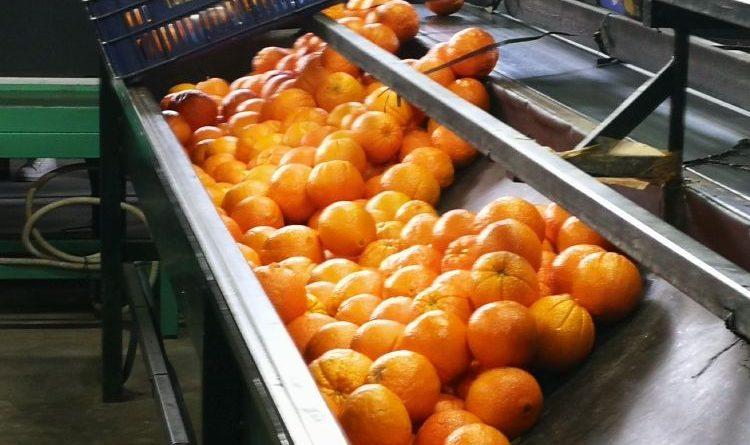 Früchte und Olivenöl von Agrocreta