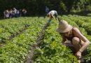 Slow Food Deutschland – Wir brauchen Konsumenten, die Verantwortung übernehmen