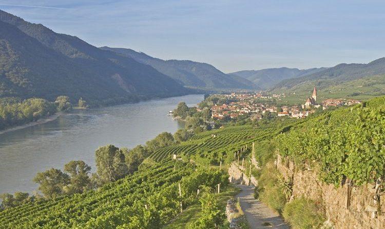 Weinwanderreise Wien-Wein & Wachau mit Jeanet Bruining