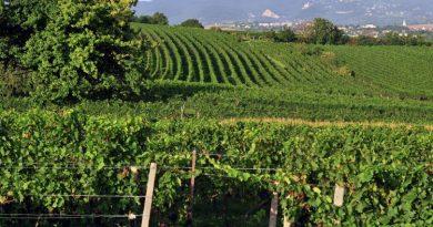 Weinnews aus Österreich – Rosalia: aus Großlage wird DAC-Gebiet