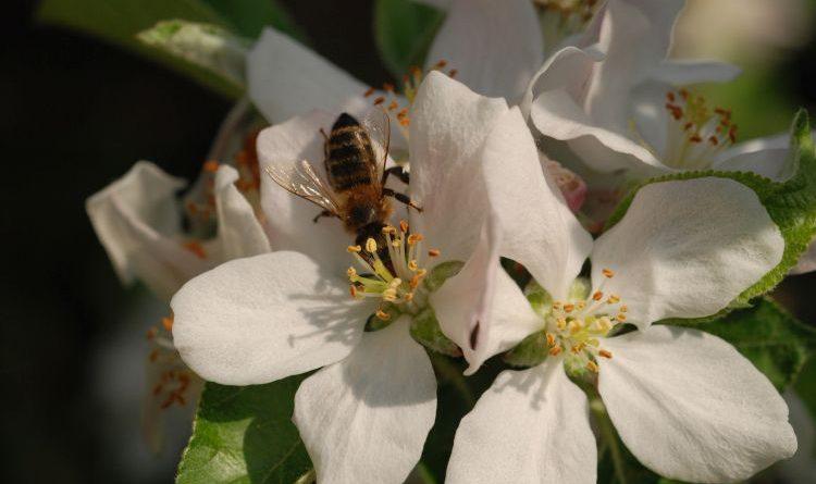 Slow Food – Bienenschutz entscheidet über die Zukunft von Mensch, Tier und Umwelt