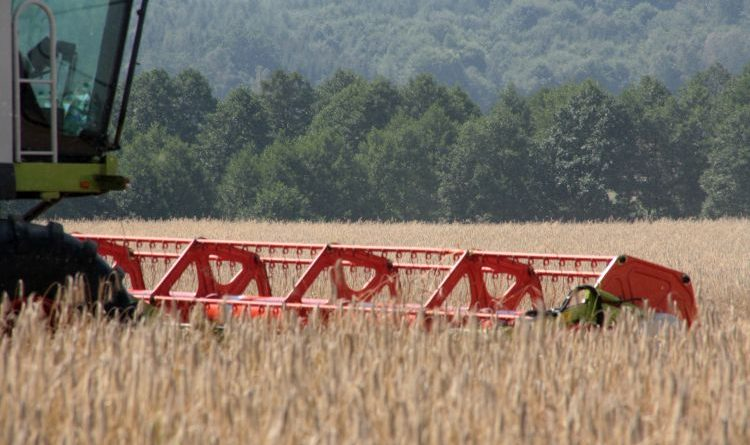 NABU: Dürre-Nothilfen notwendig – aber Umbau der Landwirtschaft muss folgen