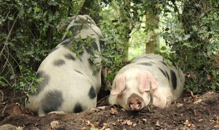 Bioland und Agrarminister der Länder sind sich einig: Staatliches Tierwohl-Label braucht anderes Konzept