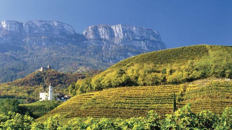 Südtiroler DOC Weine für Grillparty und Picknick