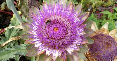 NABU: Wildbienen schützen in Haus und Garten