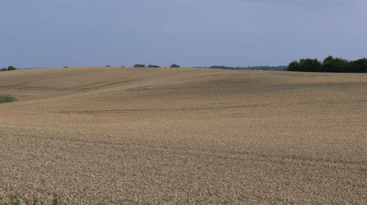 Monotoner Getreideschlag - Foto: Nabu, Ingo Ludwichowski