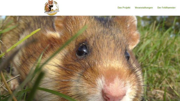 Deutsche Wildtier Stiftung - Für den Feldhamster fällt Erntedank aus