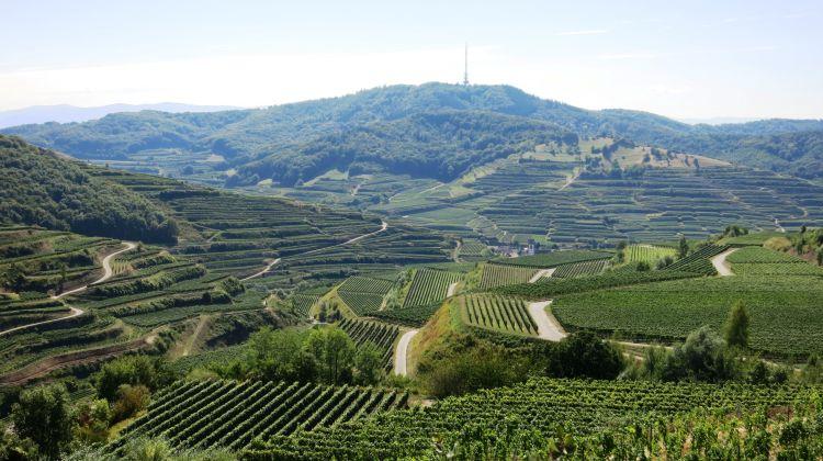 Badischer Wein - Naturgarten Kaiserstuhl - Copyright Semet