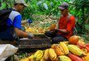 Gutes tun mit Gaumenfreuden – Das Anbauprojekt der Naturata Herkunftsschokolande Brasilien feinbitter