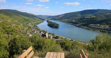 Schönste Weinsicht 2020 in Lorch am Rhein - Ausblick an der Ruine Nollig