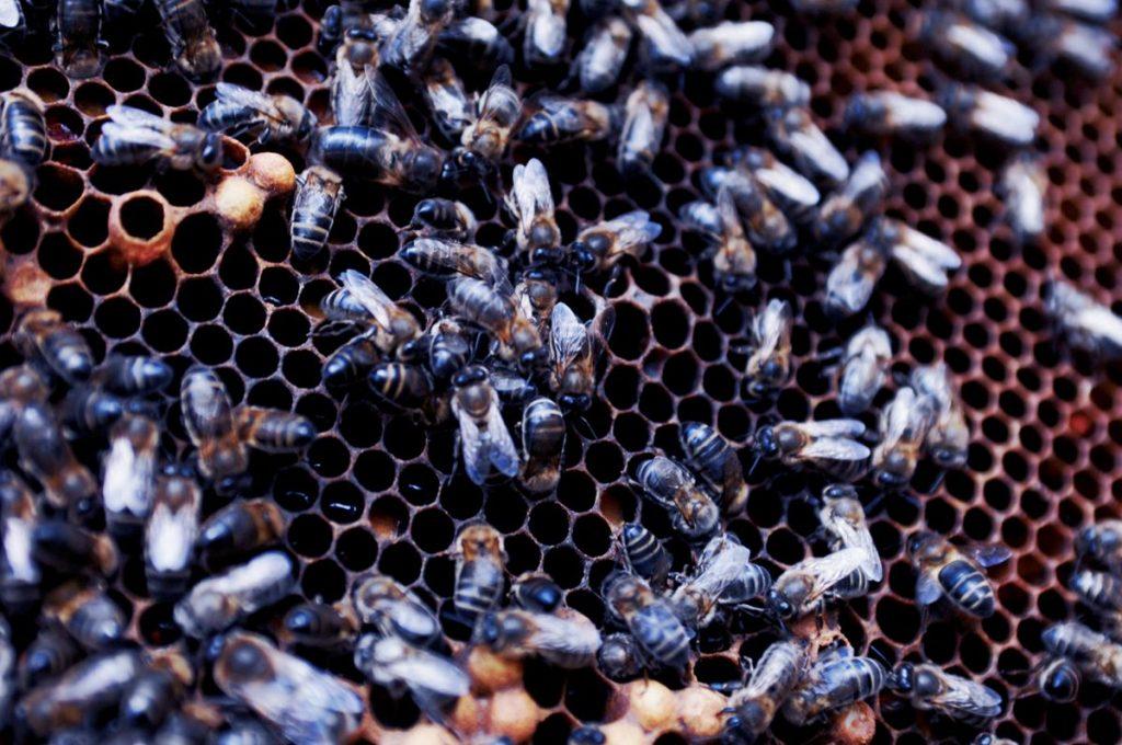 Slow Food zum Weltbienentag – Gravierendes Ausmaß des Bienen- und Insektensterbens - Foto: Slow Food