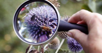 NABU: Insektenzählung im Garten von Anne Rixmann in Köln-Klettenberg Foto: Michael Sieber