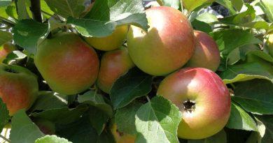 Apfel - Foto: Tutti i sensi