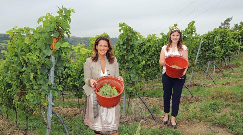 Staatsministerin Michaela Kaniber und Fränkische Weinkönigin Carolin Meyer eröffnen Weinlese in Franken. Foto: Rudi Merkl