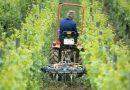 Arbeit im Weinberg, Bodenbearbeitung - Bildarchiv Deutsches Weininstitut