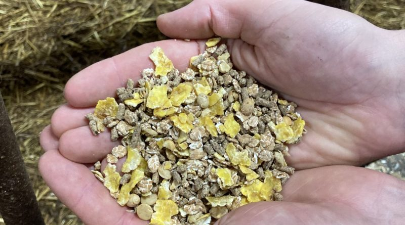 Kälbermüsli - Foto: Landwirtschaftskammer NRW