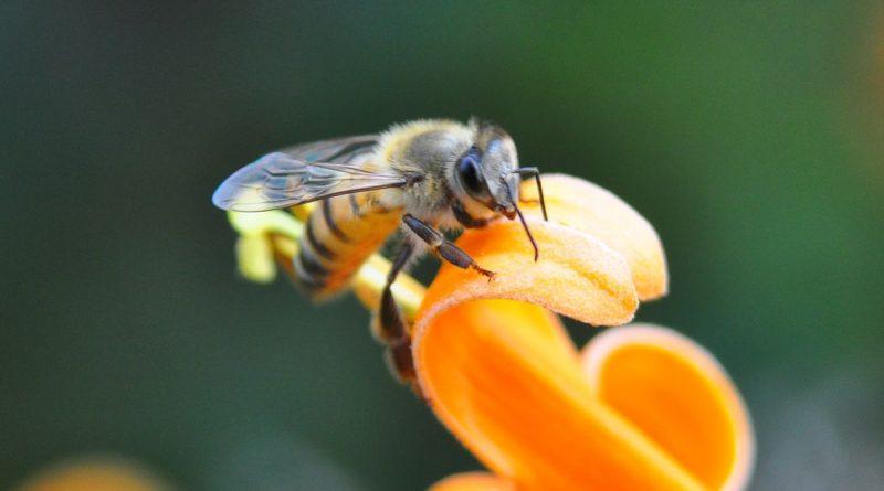 Slow Food-Einladung zur Online-Lesung zum Thema Artenschutz