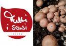 Im Tutti i sensi Test – Die Pilz-Box