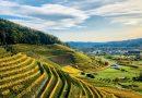 Foto: Badischer Wein